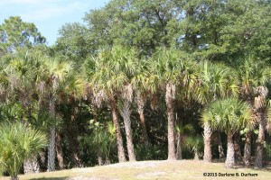 TGO Nature Center, Nature, The Great Outdoors, Titusville, Florida, Education, Plants, Tree, Trees, Palm, Prune, Pruning