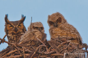 TGO Nature Center, Nature, The Great Outdoors, Titusville, Florida, Education, Birds, Great Horned Owl, Owl, Photo Album