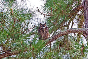 TGO Nature Center, Nature, The Great Outdoors, Titusville, Florida, Education, Birds, Oak Cove, Owl, Owlet, Nest, Photo Album