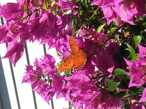 TGO Nature Center, Nature, The Great Outdoors, Titusville, Florida, Education, Insect, Butterfly, Gulf Fritillary, Orange Butterfly, Photo Album