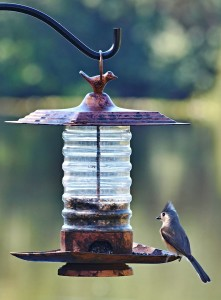 TGO Nature Center, Nature, The Great Outdoors, Titusville, Florida, Education, Birds, Tufted Titmouse, Titmouse, Bird Feeder, Photo Album