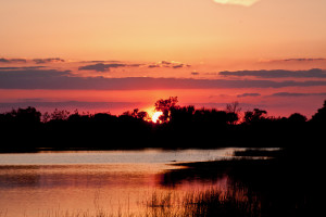 TGO Nature Center, Nature, The Great Outdoors, Titusville, Florida, Education, TGO, Sun, Sunset, Photo Album