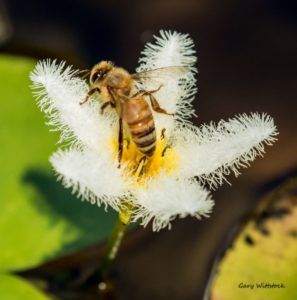 TGO Nature Center, Nature, The Great Outdoors, Titusville, Florida, TGO, Insect, Honey Bee, Bee, Photo Album